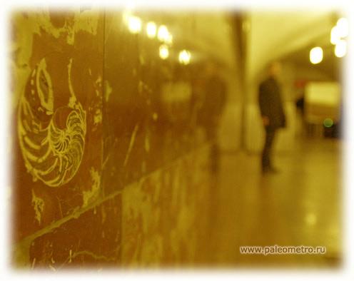 Фото: paleometro.ru